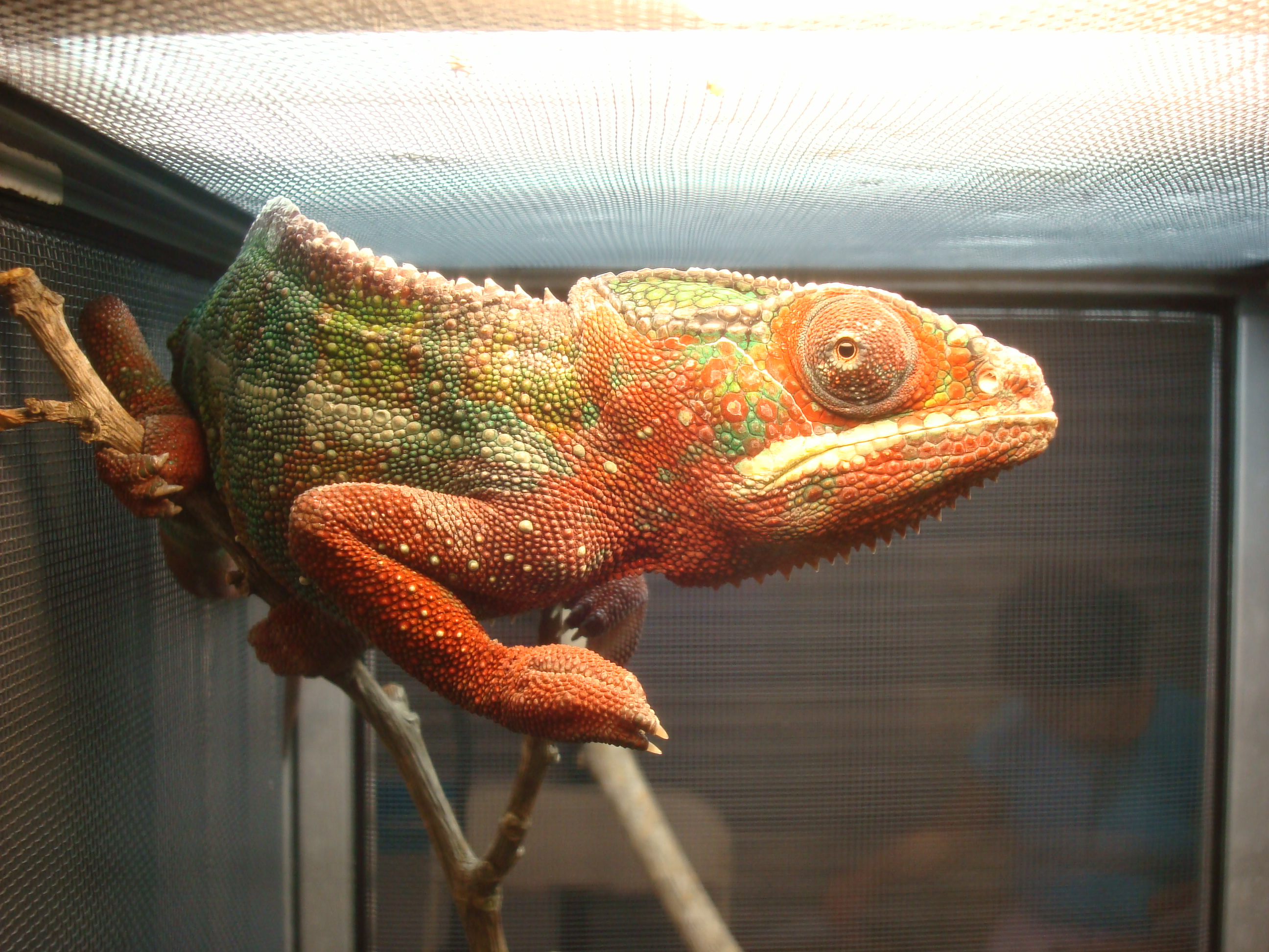 Index of /wp-content/flagallery/los-angeles-reptile-expo - photo#4
