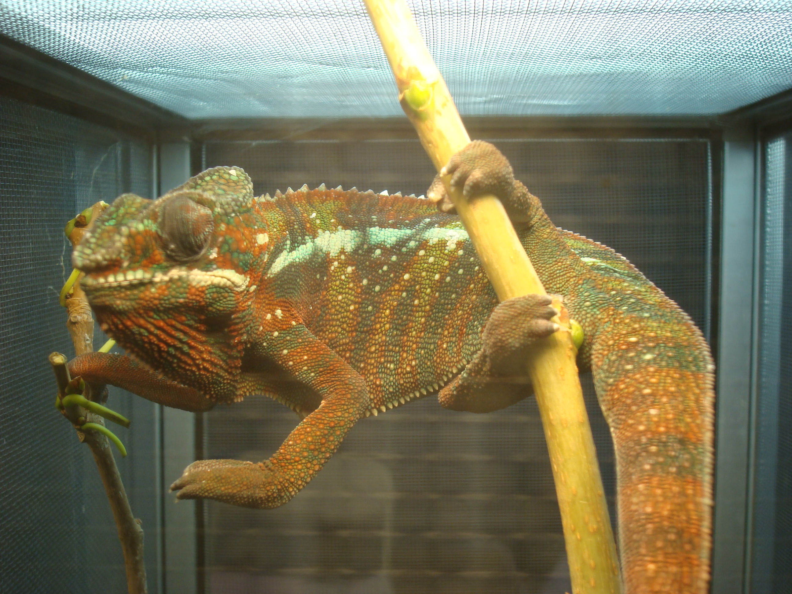 Index of /wp-content/flagallery/los-angeles-reptile-expo - photo#12