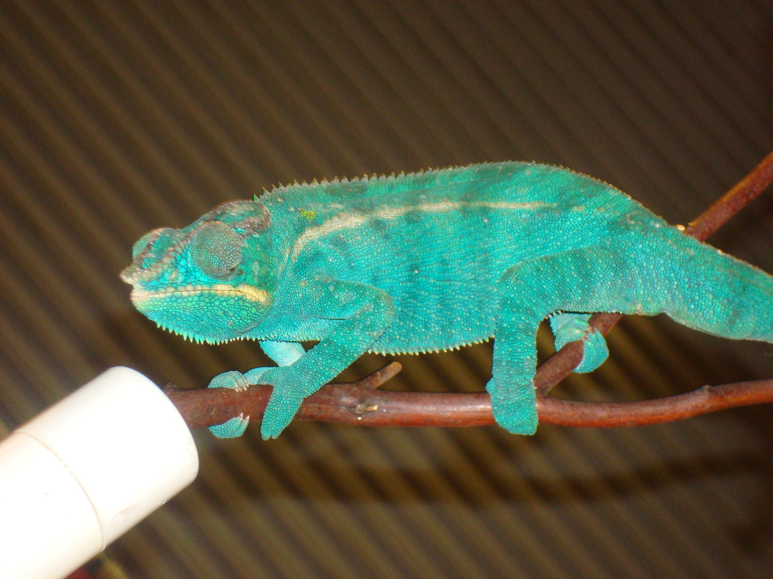Index of /wp-content/flagallery/los-angeles-reptile-expo - photo#1
